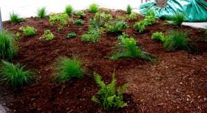 Green Life Rain Garden