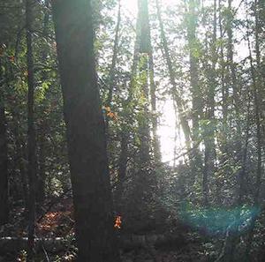 Algonquin Ridge Natural Area sunspot C Boget Nov 7 2003-REDUCED