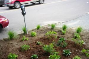 Green Life Rain Garden Aug 17 2012 20