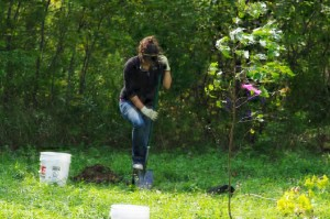 Howes Landing Tree Restoration Kayla Danserau